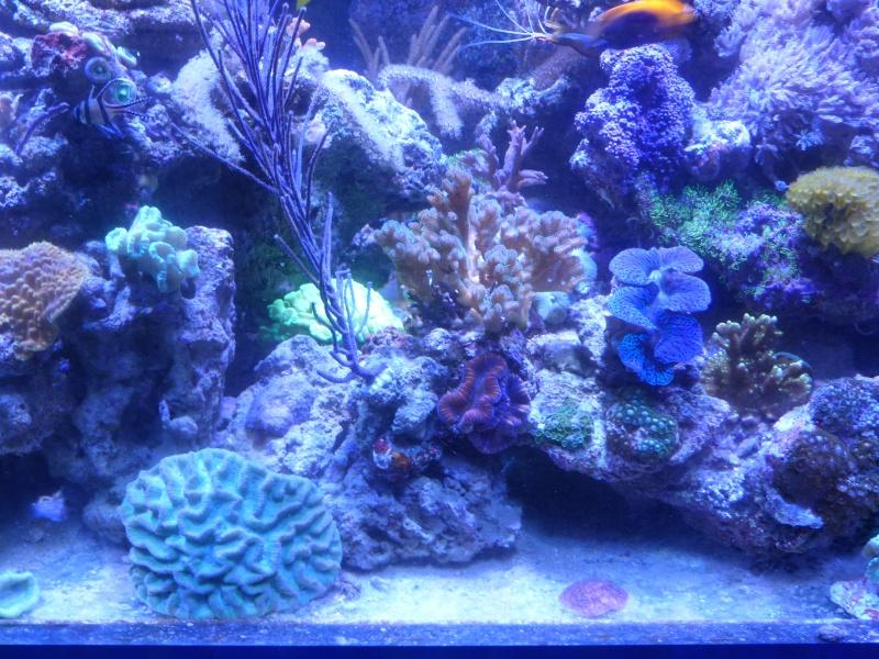 Mon nouveau reef de 830L - Page 3 P1000017
