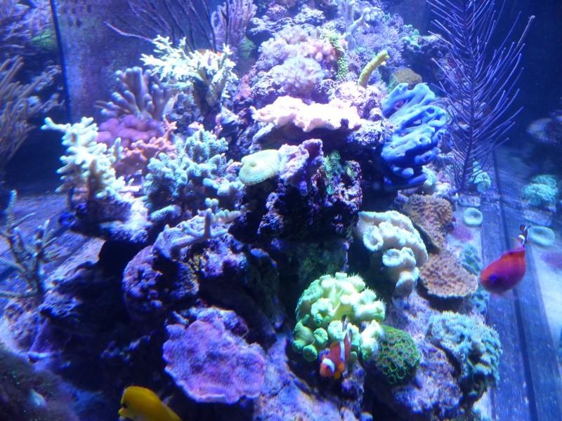 Mon nouveau reef de 830L - Page 3 P1000020