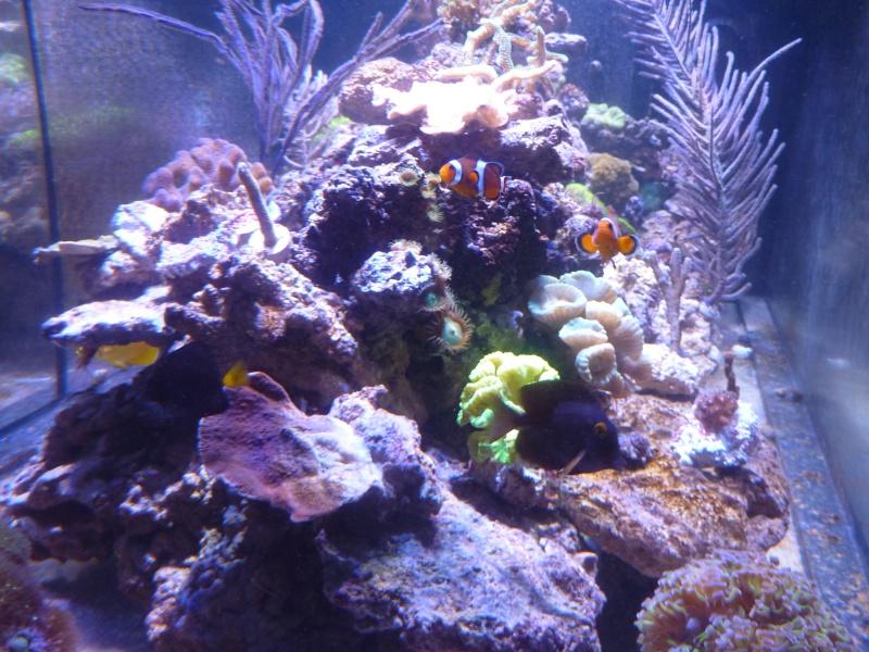 Mon nouveau reef de 830L P1010812