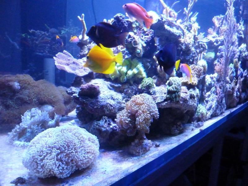 Mon nouveau reef de 830L - Page 2 P1010911