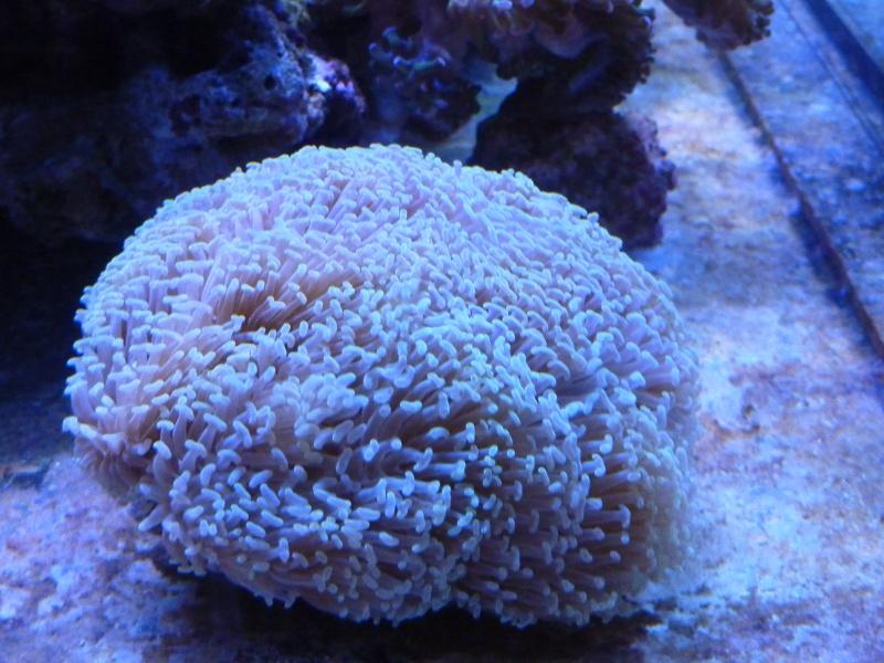 Mon nouveau reef de 830L - Page 2 P1010912