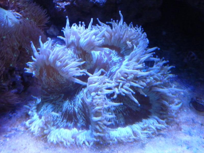 Mon nouveau reef de 830L - Page 2 P1010913