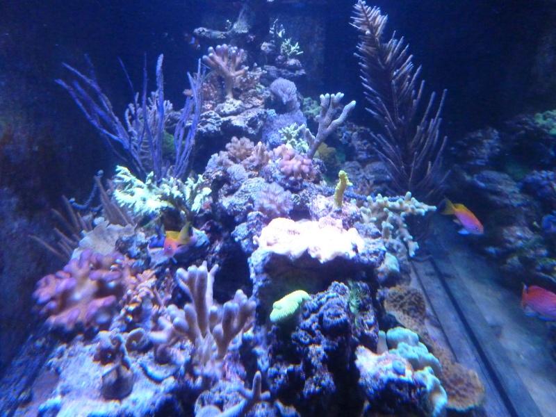 Mon nouveau reef de 830L - Page 2 P1010915