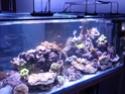 Mon nouveau reef de 830L P1010612
