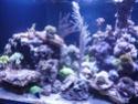 Mon nouveau reef de 830L P1010712