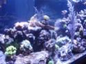 Mon nouveau reef de 830L P1010713