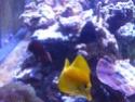 Mon nouveau reef de 830L P1010811