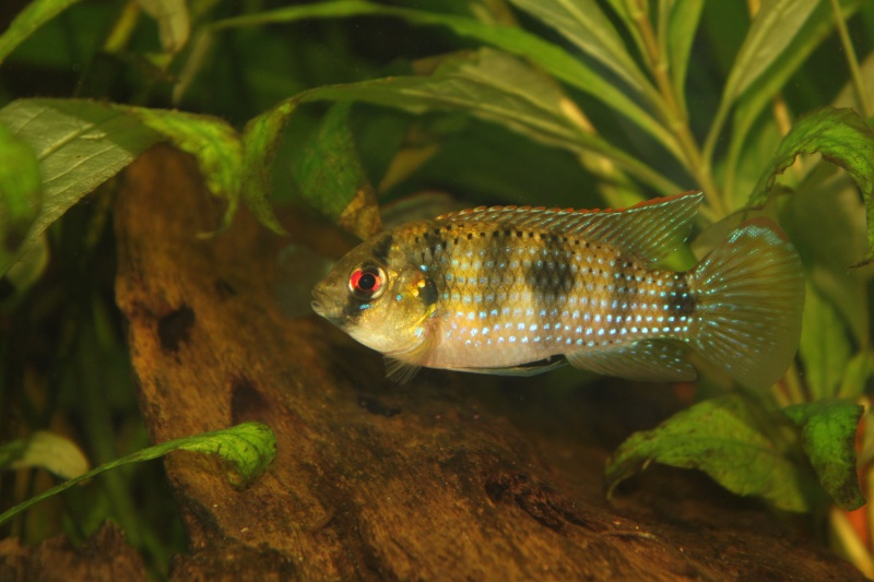 Identification poisson Img_2612