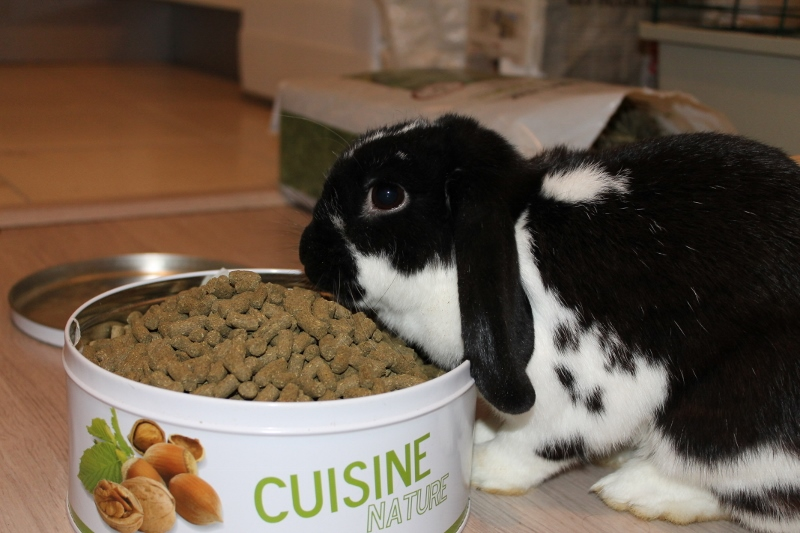 Hermine, lapine bélier, née en 2012 Img_4511