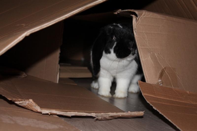 Hermine, lapine bélier, née en 2012 Img_5011