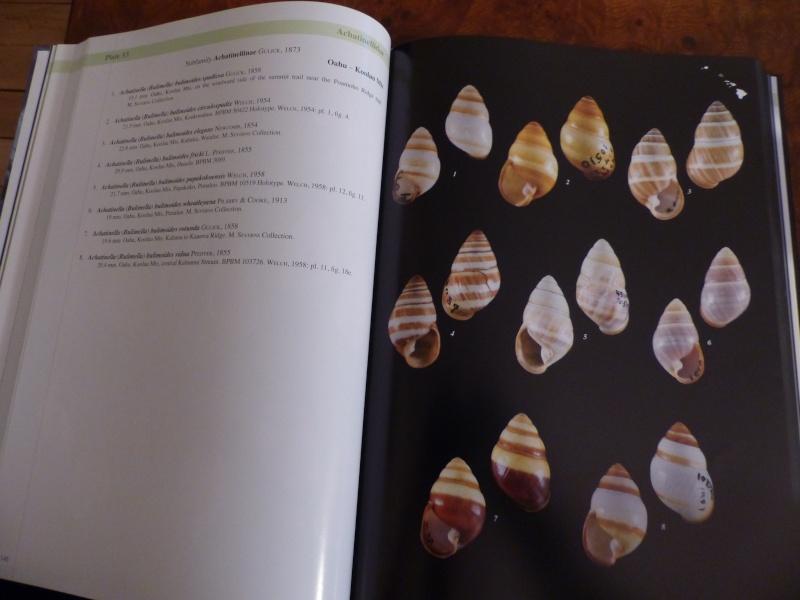 Shells of the Hawaiian Islands : The Land Shells par Mike Severns P1000220