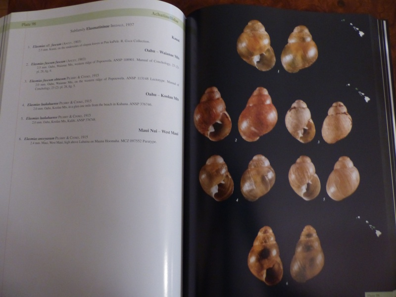Shells of the Hawaiian Islands : The Land Shells par Mike Severns P1000224