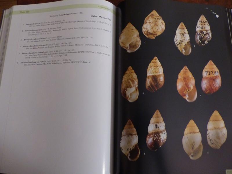 Shells of the Hawaiian Islands : The Land Shells par Mike Severns P1000227