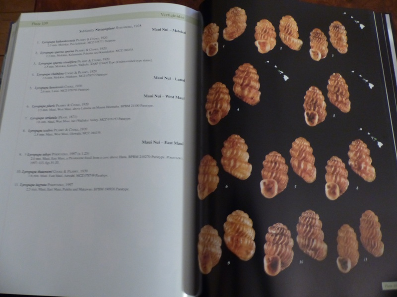 Shells of the Hawaiian Islands : The Land Shells par Mike Severns P1000228