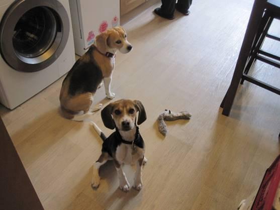 Témoignage d'adoption : Iago ! Image711