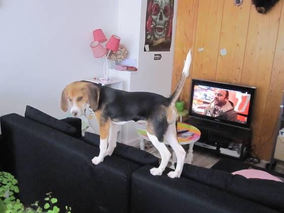 Témoignage d'adoption : Iago ! Image712