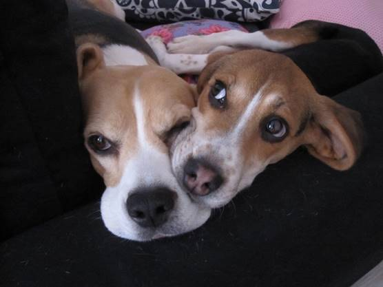 Témoignage d'adoption : Iago ! Image714