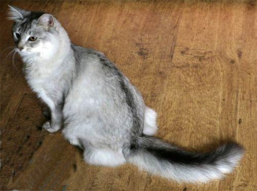 My Dead Cats..... Inge10