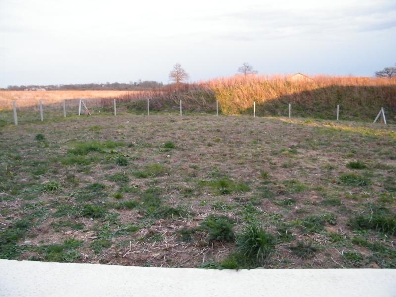 Mon jardin au commencement!  Dscf5621
