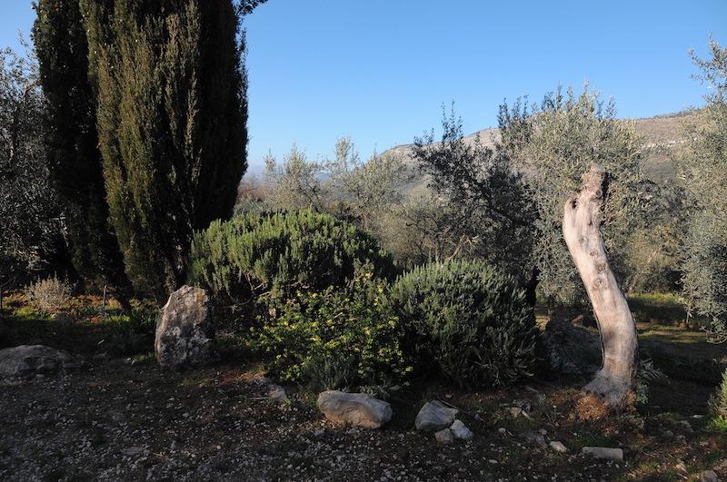 regain fleuri Cyprys10