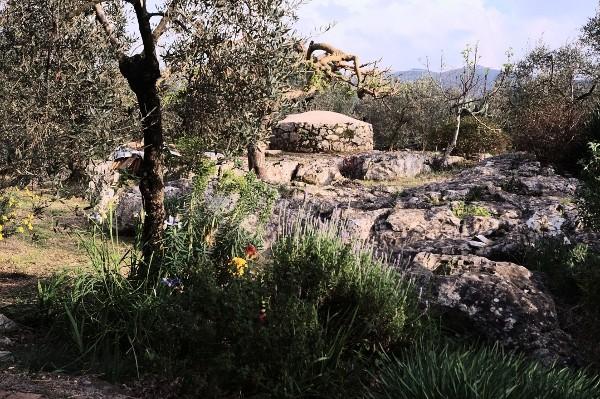 Analluba - Un petit tour du jardin au printemps Jardin10