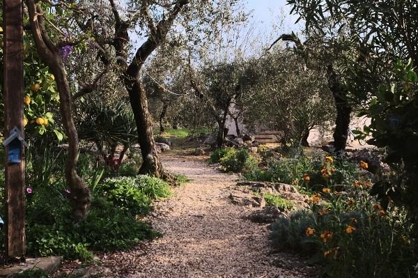 Analluba - Un petit tour du jardin au printemps Jardin11