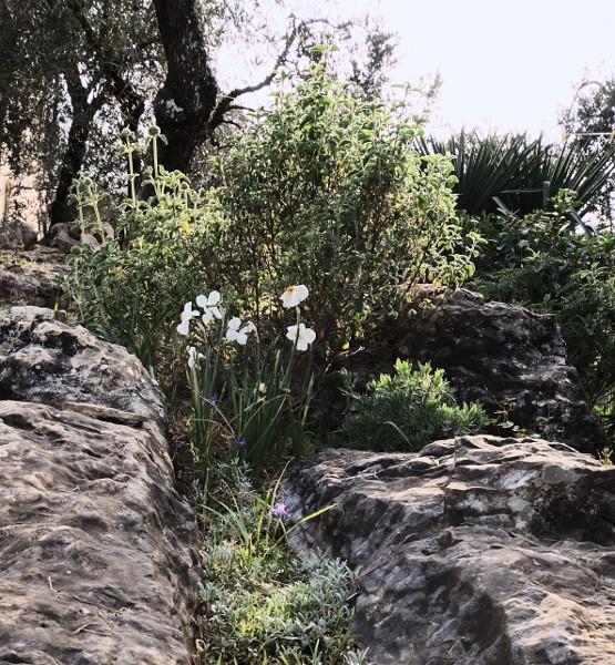 Analluba - Un petit tour du jardin au printemps Jardin12