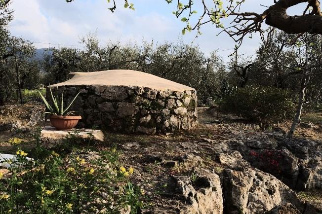 Analluba - Un petit tour du jardin au printemps Jardin13