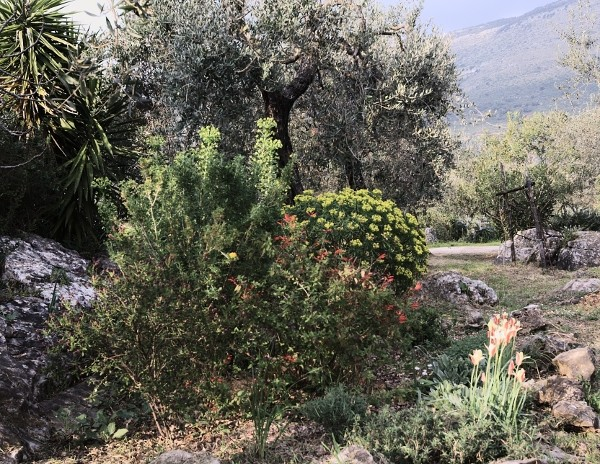 Analluba - Un petit tour du jardin au printemps Jardin14