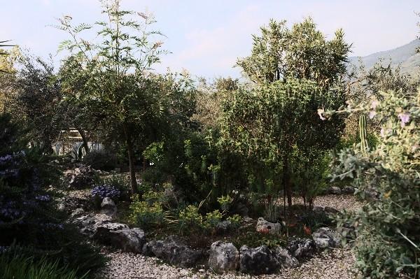 Analluba - Un petit tour du jardin au printemps Jardin16