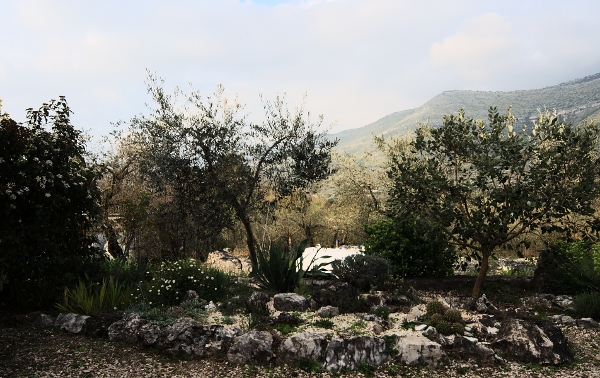 Analluba - Un petit tour du jardin au printemps Jardin17