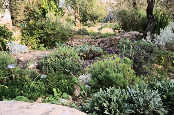 Analluba - Un petit tour du jardin au printemps Jardin18