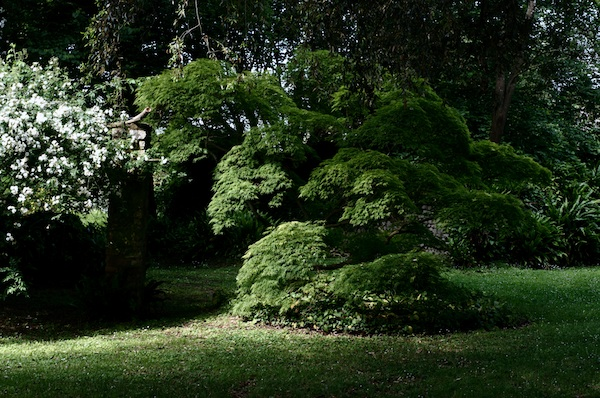 (Italie) Giardini di Ninfa Panora11