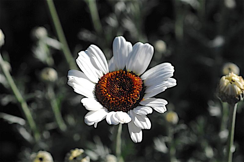 regain fleuri Rhodan10