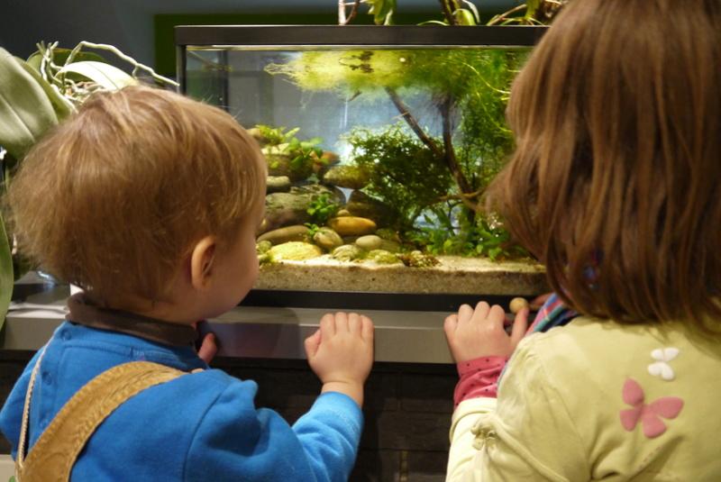 Aquarium ouvert low-tech 40 litres Odelin10