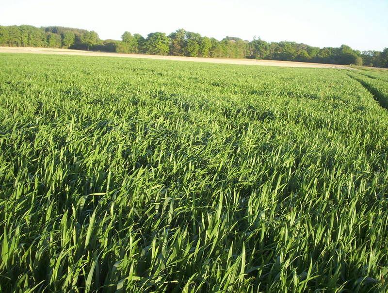 suivi des blés tendre 2017 - Page 3 100_6912