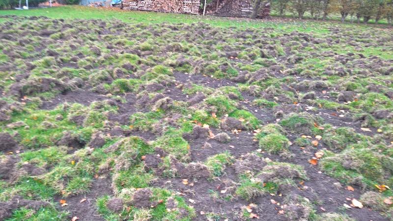 Des trous dans ma pelouse. Qui?! Wp_20110