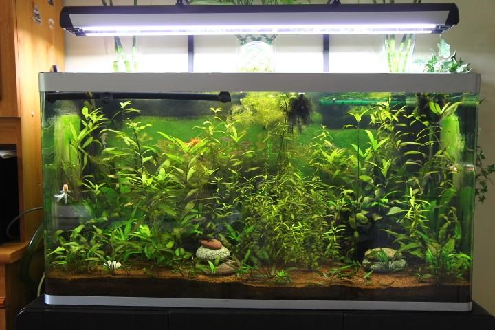 transformation de mon 320l en bac pour poisson japonais - Page 3 Img_0123