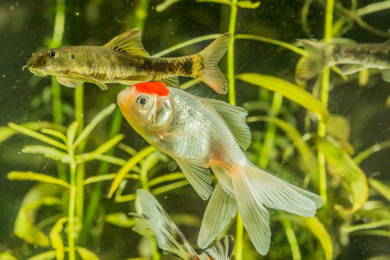 transformation de mon 320l en bac pour poisson japonais - Page 3 Img_0771