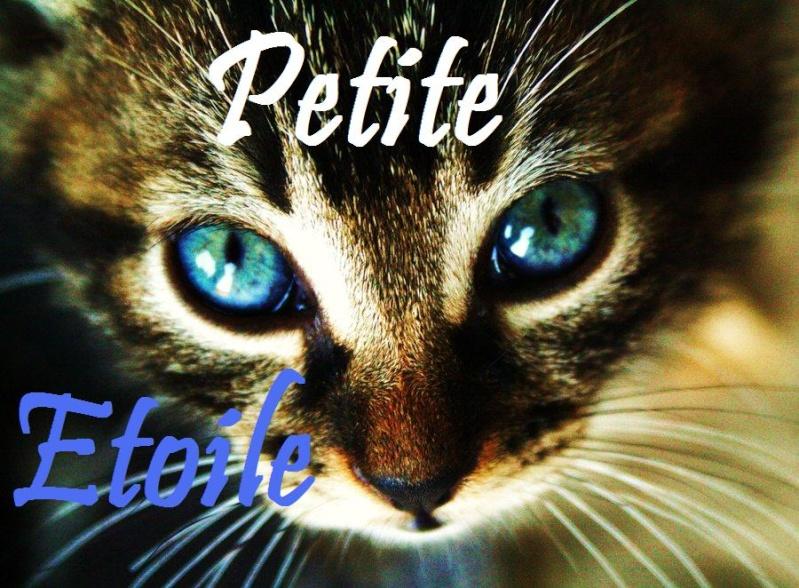 Atelier de Feuillou ♫ - Page 2 Cat_7_10