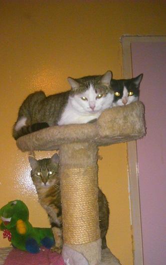 Recherchons une structure pour accueillir un chat en semi-liberté Dsc_1411