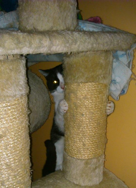 Recherchons une structure pour accueillir un chat en semi-liberté Dsc_1412