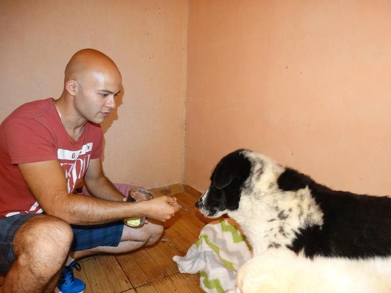 TAIKO, mâle, taille moyenne , né environ en 2010 (chez Anda et Alina) - Adopté par Monique (81) T210