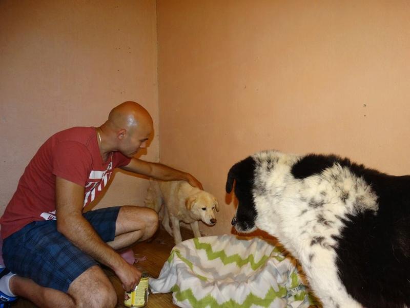 TAIKO, mâle, taille moyenne , né environ en 2010 (chez Anda et Alina) - Adopté par Monique (81) T510