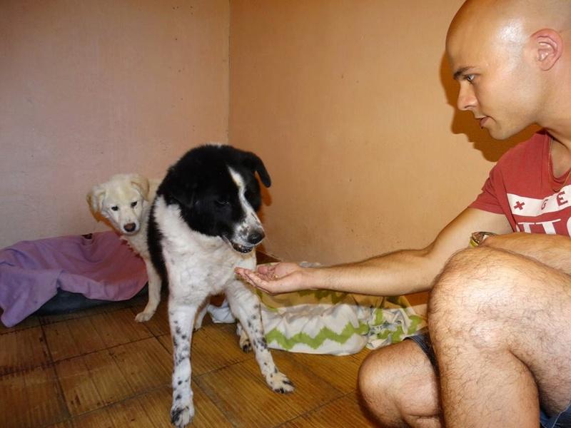 TAIKO, mâle, taille moyenne , né environ en 2010 (chez Anda et Alina) - Adopté par Monique (81) T610