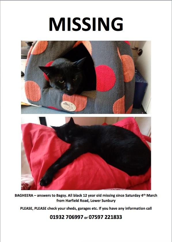 UPDATE!!  HE IS HOME!!! Katrina's Bagheera has Gone Missing Cat_lo10