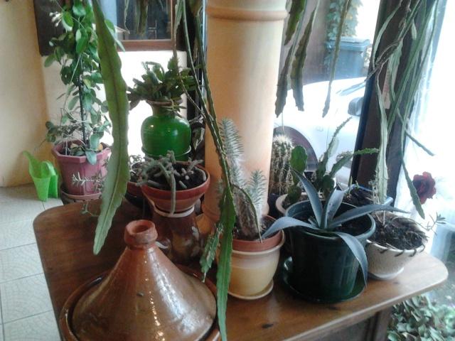 plantation de nouveaux fraisiers et commancement de mettre à l'abrit certaine plantes  Photo011