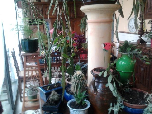 plantation de nouveaux fraisiers et commancement de mettre à l'abrit certaine plantes  Photo012