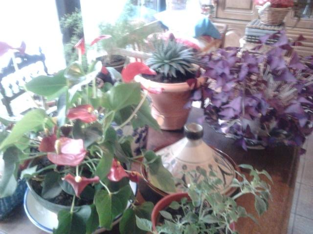 plantation de nouveaux fraisiers et commancement de mettre à l'abrit certaine plantes  Photo013