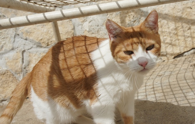 Katze Dalma hat ein liebes Zuhause gefunden Dalma_10